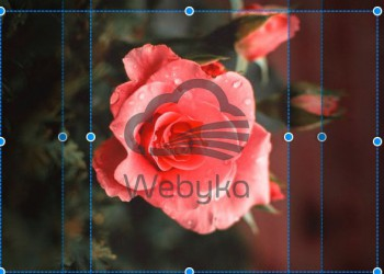 مشکلات نسبت ابعاد تصاویر و عدم نمایش حاشیه های عکس